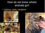 how do we know where animals go11