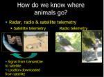 how do we know where animals go13