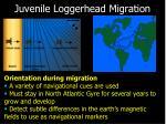 juvenile loggerhead migration