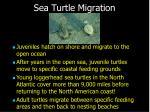 sea turtle migration