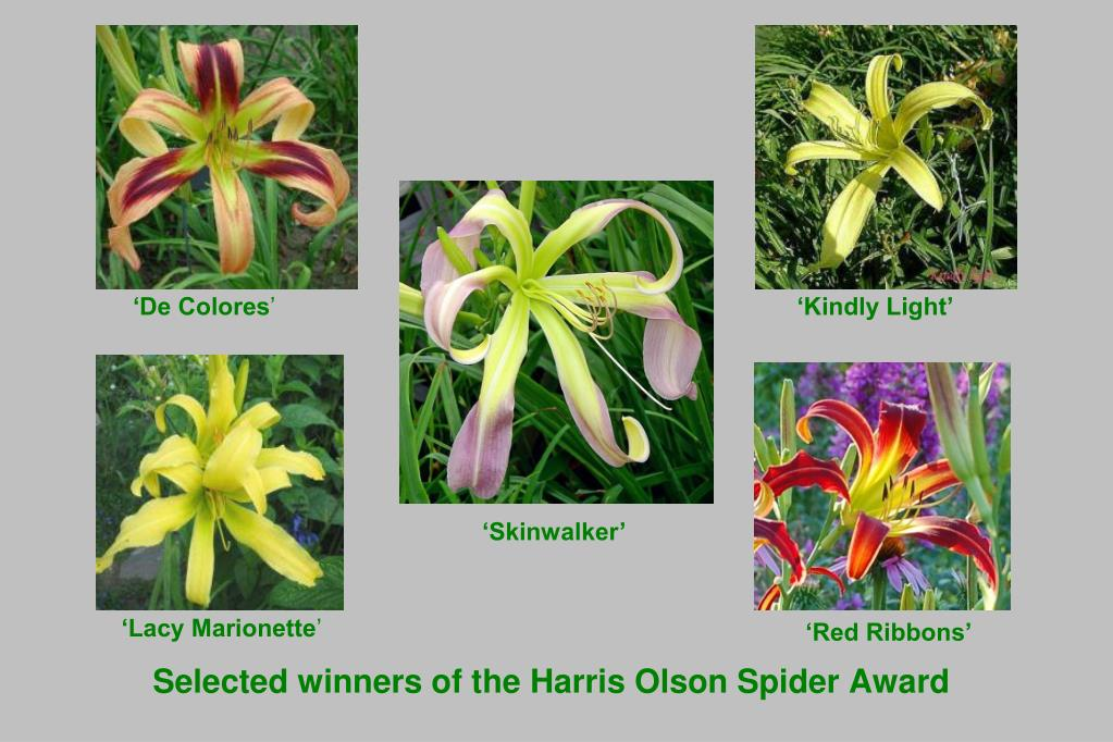 Selected winners of the Harris Olson Spider Award