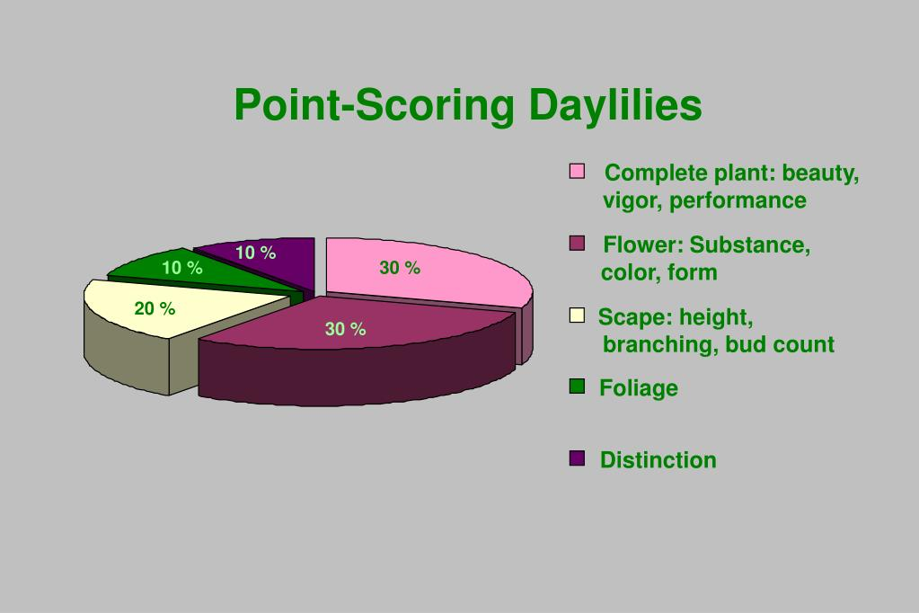 Point-Scoring Daylilies