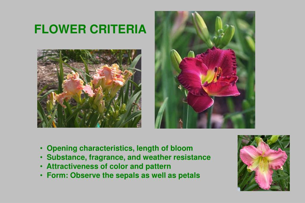 FLOWER CRITERIA