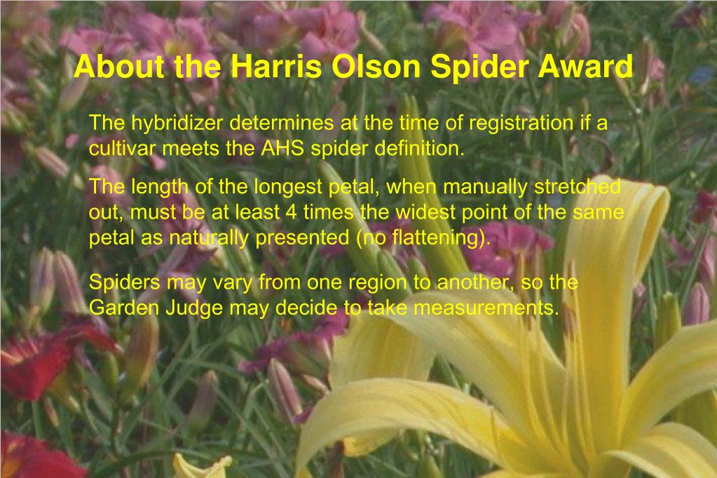 About the Harris Olson Spider Award