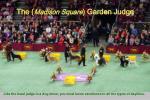 the madison square garden judge