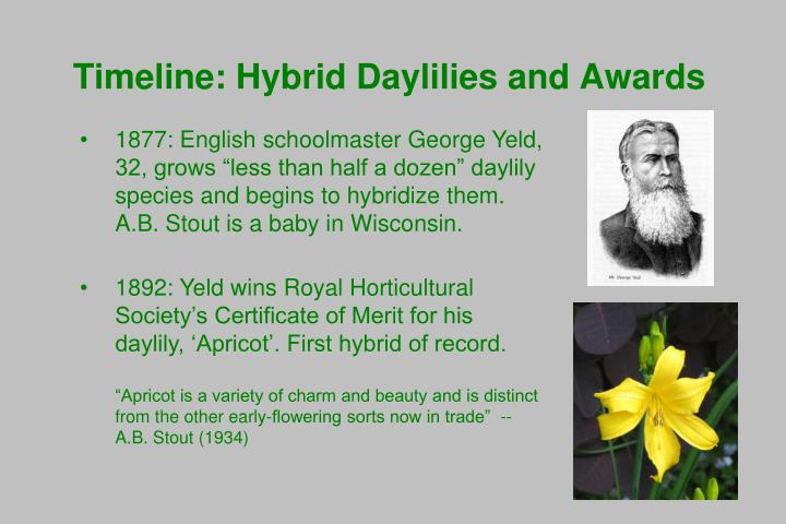 Timeline hybrid daylilies and awards