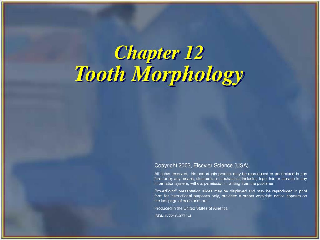 chapter 12 tooth morphology l.