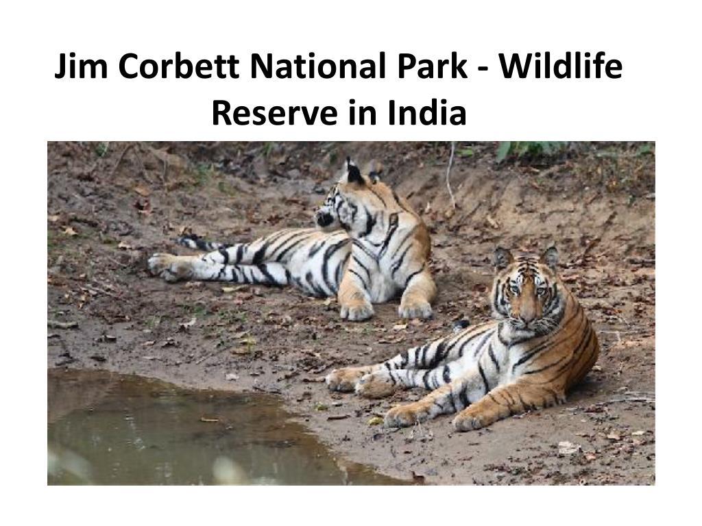jim corbett national park wildlife reserve in india l.