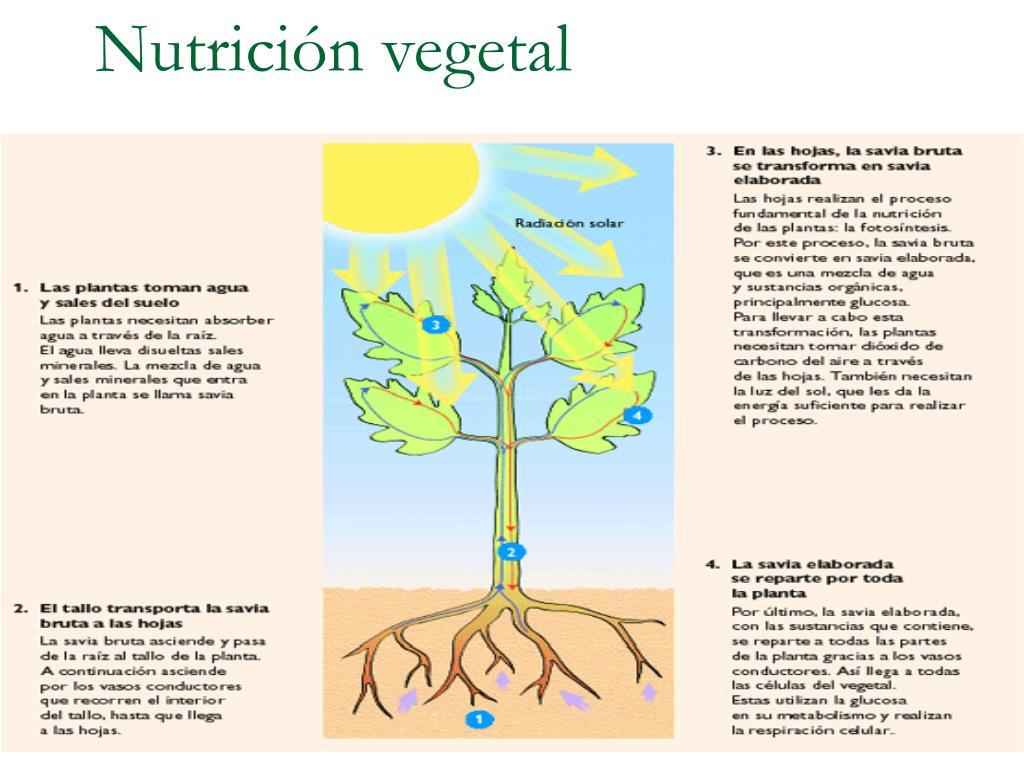 nutrici n vegetal l.