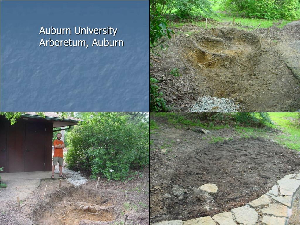 Auburn University Arboretum, Auburn