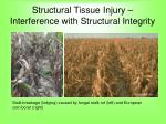 structural tissue injury interference with structural integrity