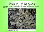 tissue injury to leaves57