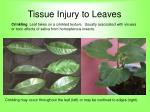 tissue injury to leaves59