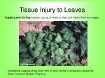 tissue injury to leaves60