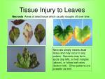 tissue injury to leaves65
