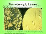 tissue injury to leaves70