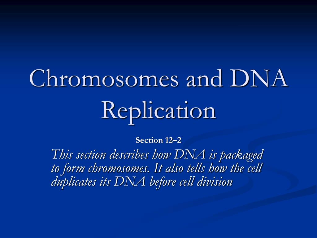 chromosomes and dna replication l.