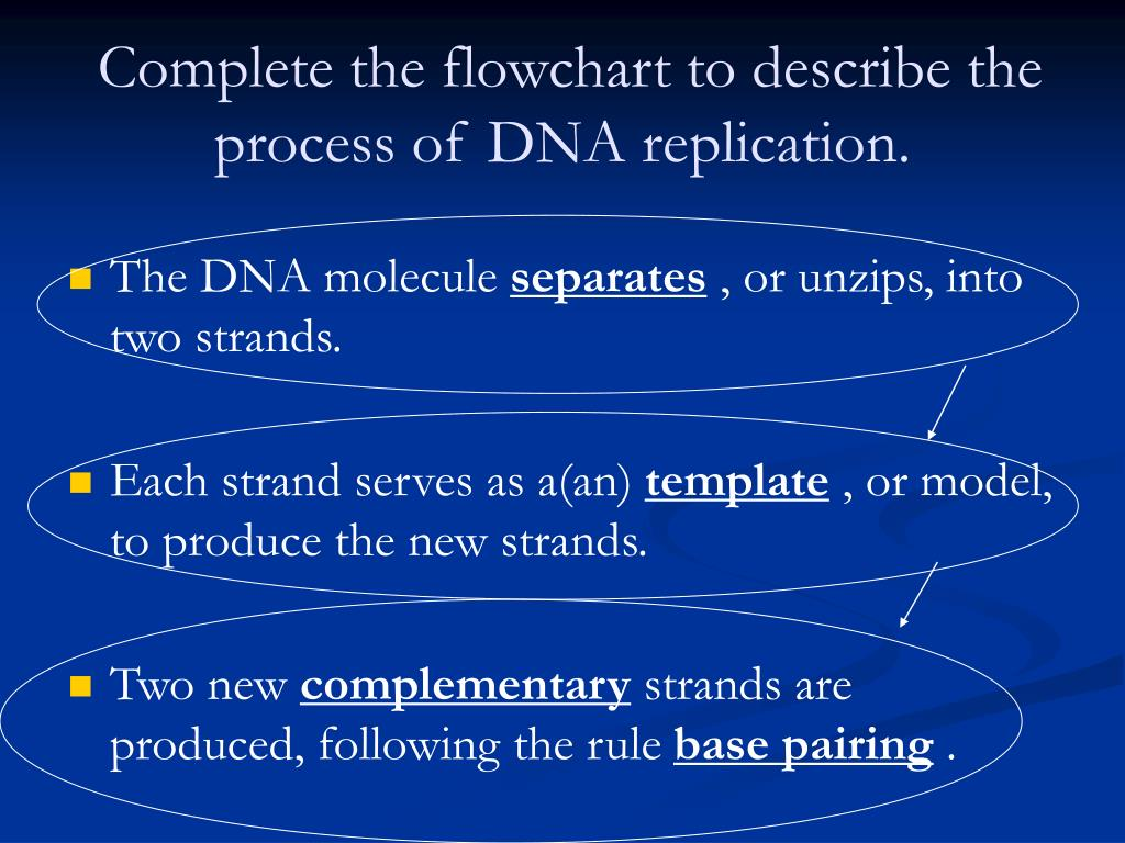 Ppt chromosomes and dna replication powerpoint for Explain how dna serves as its own template during replication