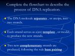 complete the flowchart to describe the process of dna replication