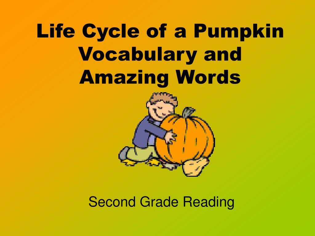 life cycle of a pumpkin vocabulary and amazing words l.