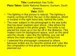title leatherback sea turtle place taken galibi national reserve surinam south america date 2009