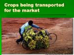 crops being transported for the market
