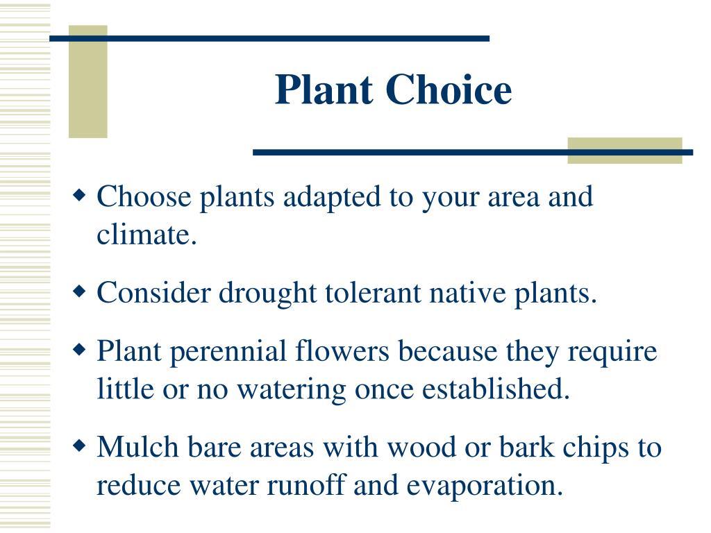 Plant Choice
