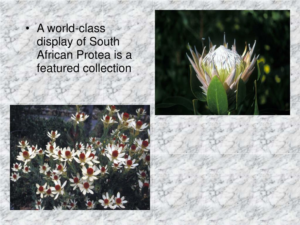 A world-class display of South African Protea is a featured collection