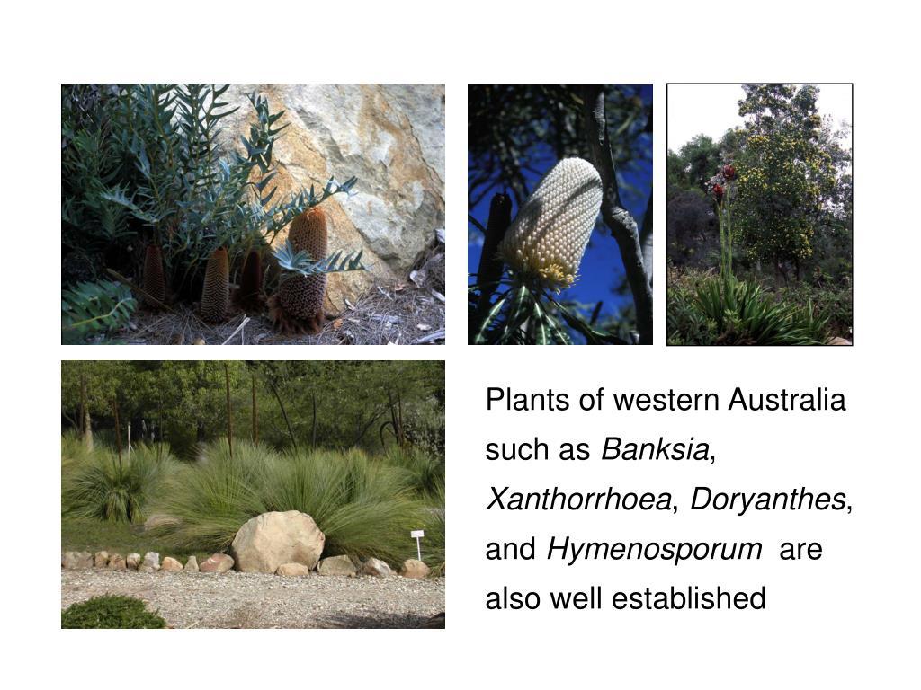 Plants of western Australia such as
