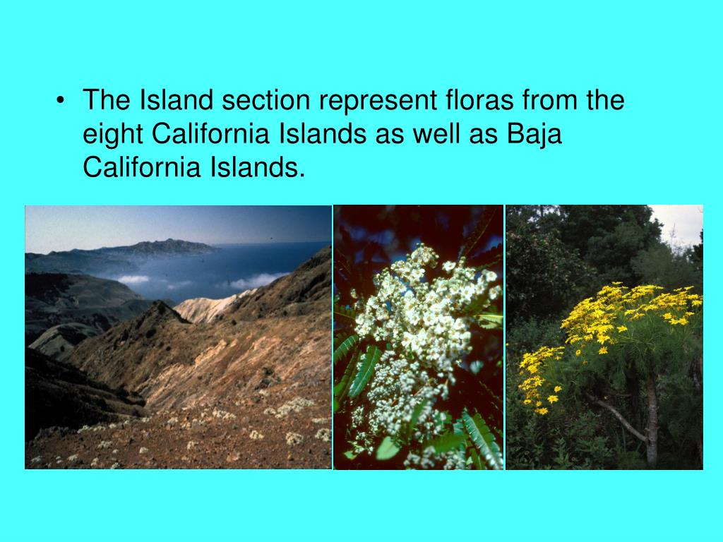 The Island section represent floras from the eight California Islands as well as Baja California Islands.