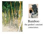 bamboo the garden s ancient conscience