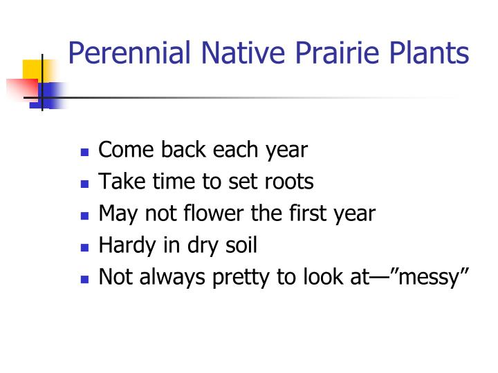 Perennial native prairie plants