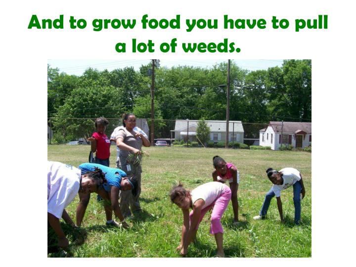 And to grow food you have to pull a lot of weeds
