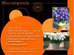 bliss campanula