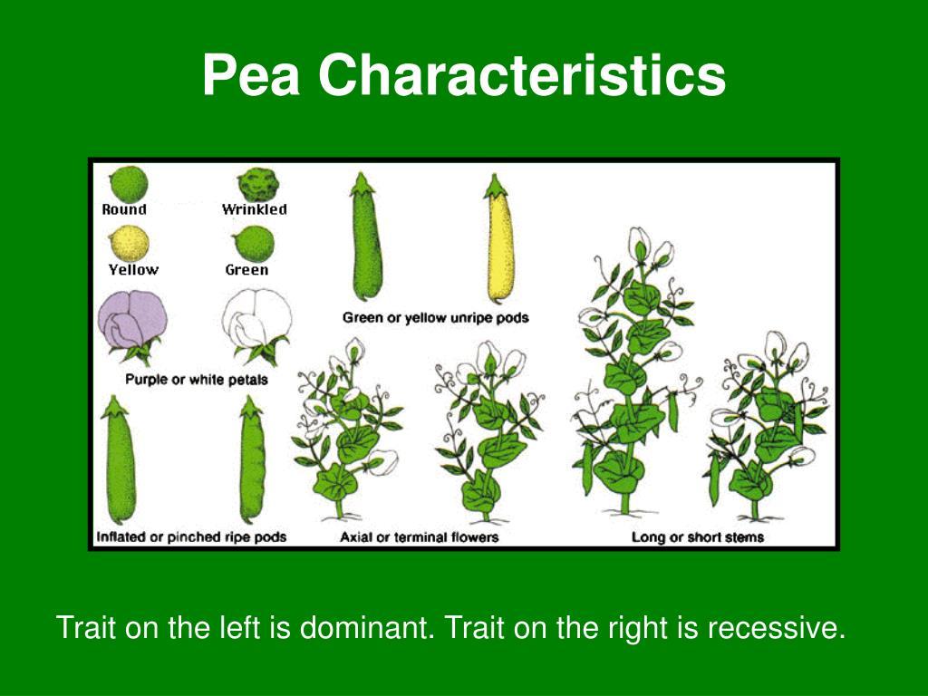 Pea Characteristics