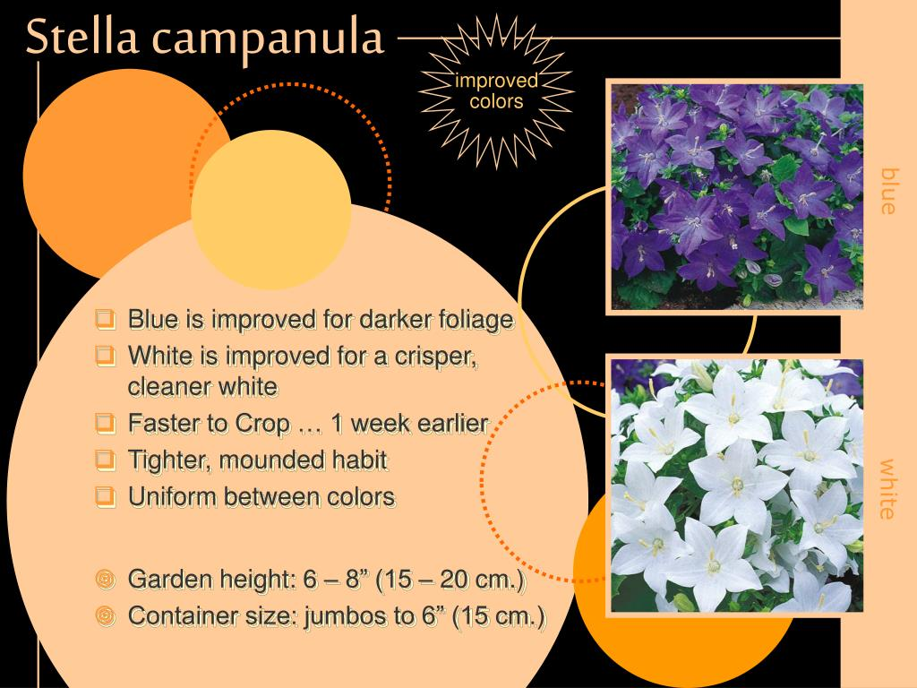 Blue is improved for darker foliage