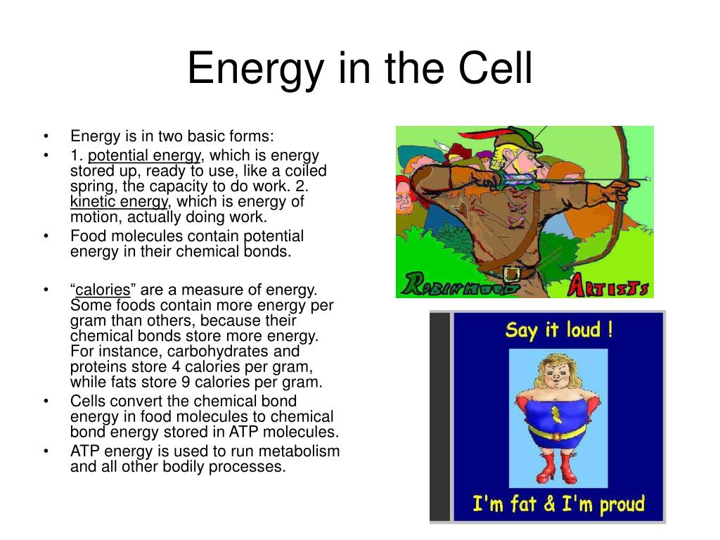 energy in the cell l.