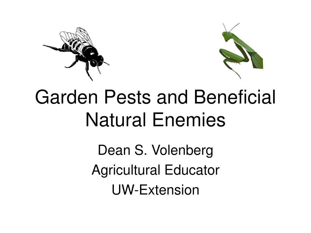 garden pests and beneficial natural enemies l.
