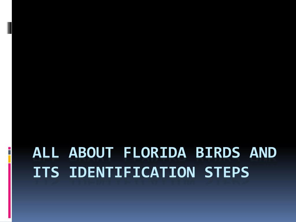 all about florida birds and its identification steps l.