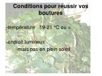 conditions pour r ussir vos boutures