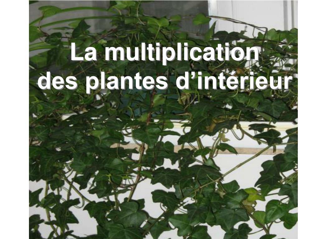 la multiplication des plantes d int rieur l.