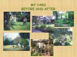 my yard before and after