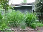 sheet mulch when possible