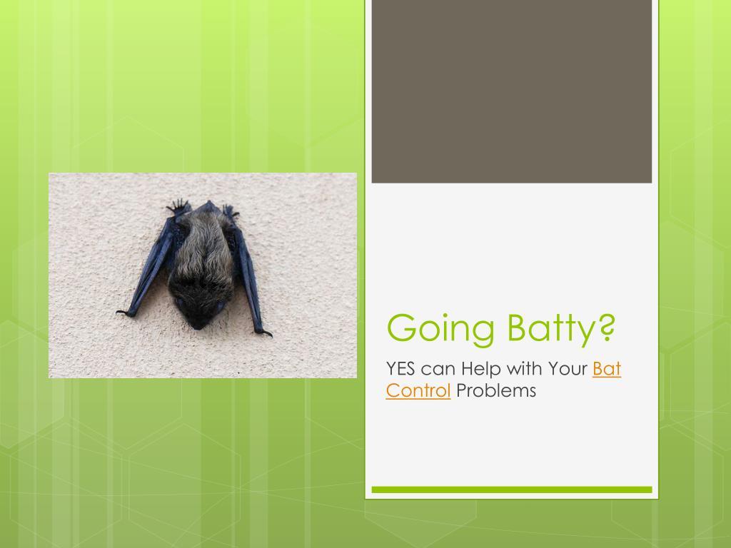 going batty l.