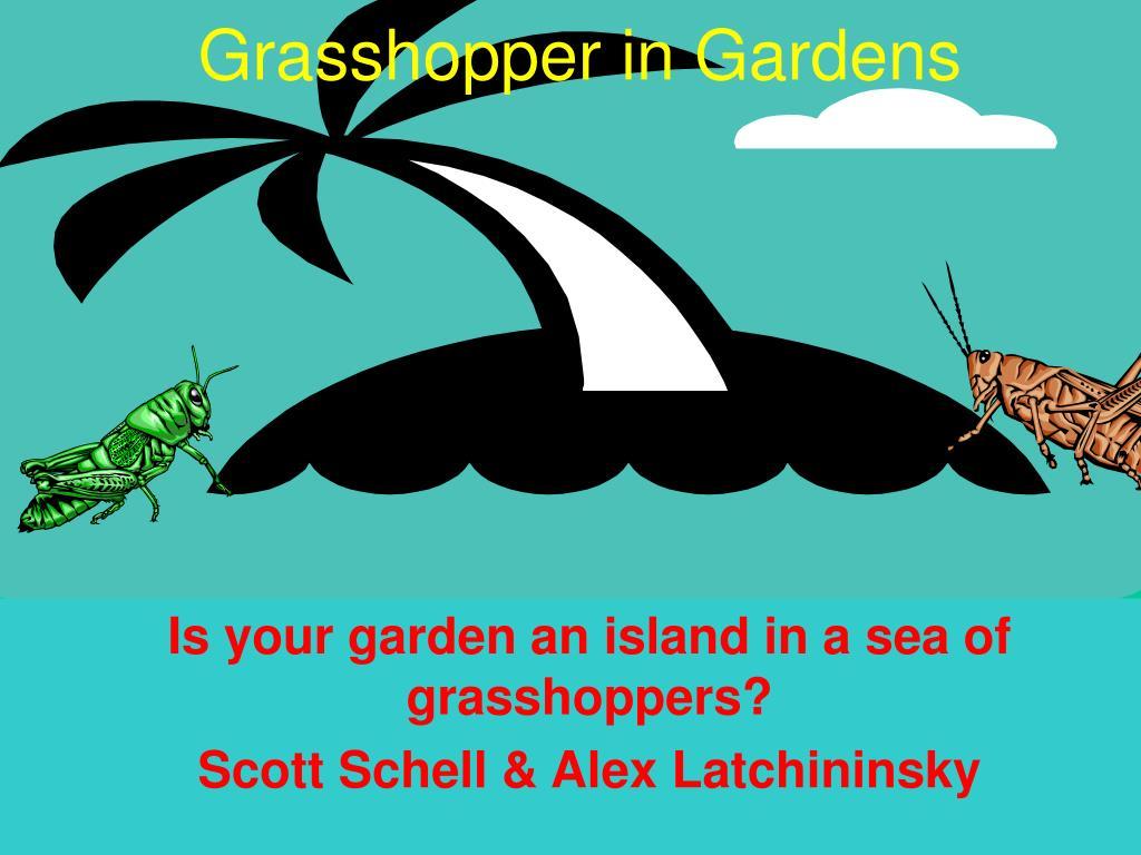 grasshopper in gardens l.