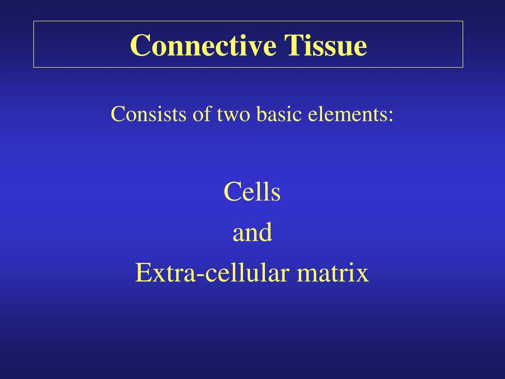 connective tissue l.