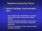 supportive connective tissue25