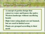 what is xeriscape5