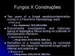 fungos x constru es