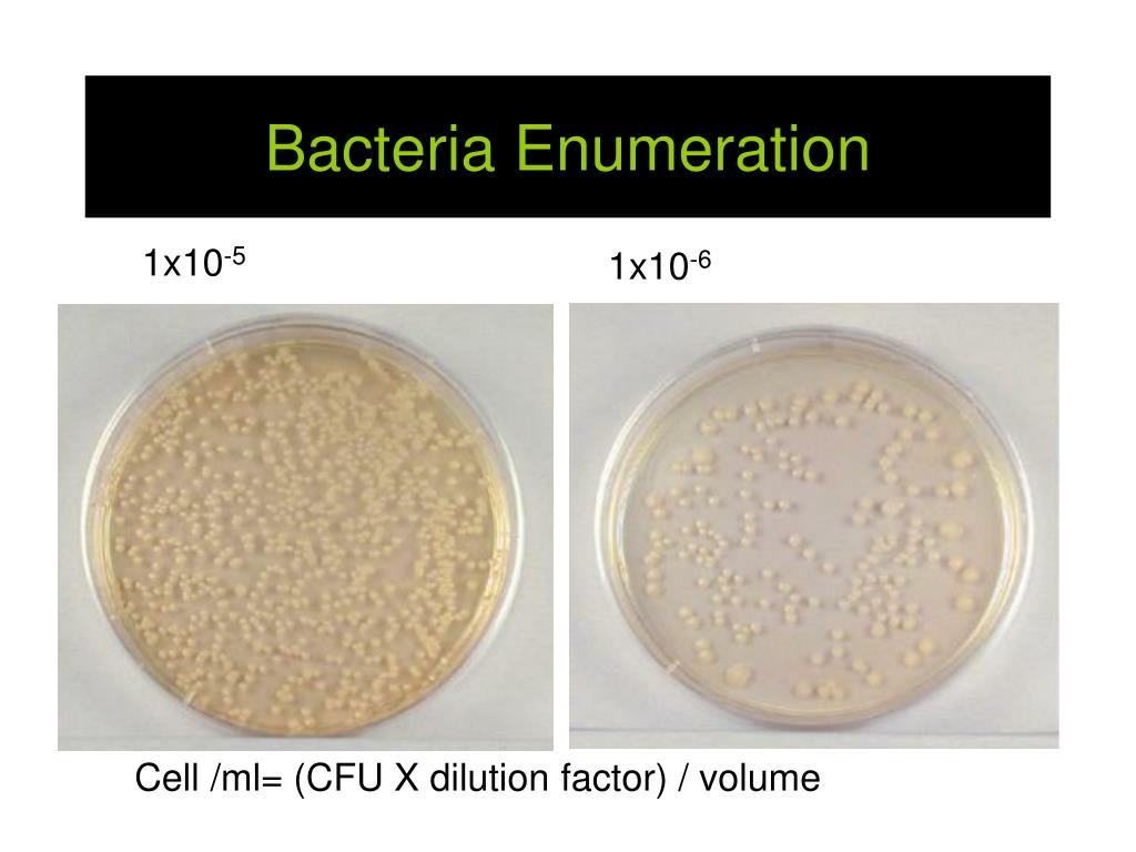 Bacteria Enumeration